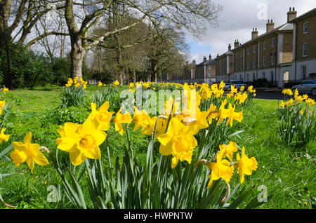 Poundbury, Dorset, UK. 22nd Mar, 2017. UK Weather. Daffodils flowering in the beautiful warm spring sunshine and - Stock Photo