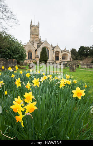 Daffodils in the graveyard of St John the Baptist parish church, Cirencester in the Cotswolds, Gloucester, England, - Stock Photo