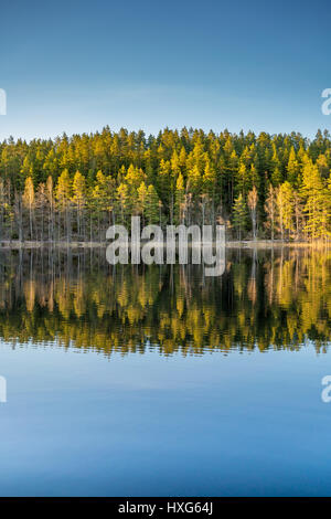 VIEW OF A SCANDINAVIAN PINE AND BIRCH FOREST AND LAKE WITH WARM EVENING LIGHT SHOT NEAR THE SWEDISH FINNISH BORDER - Stock Photo