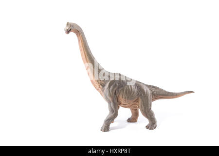 Brown Brachiosaurus altithorax from the Late Jurassic full body white background - Stock Photo