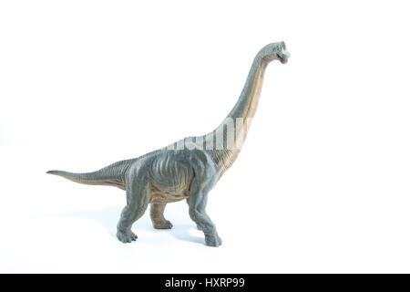 Green Brachiosaurus altithorax from the Late Jurassic full body white background - Stock Photo
