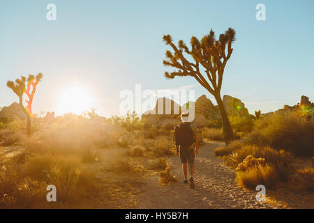 USA, California, Joshua Tree National Park, Man hiking at sunset - Stock Photo