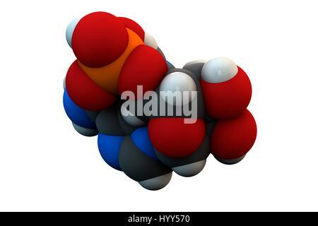 Adenosine monophosphate (AMP, adenylic acid) molecule. Nucleotide monomer of RNA (ribonucleic acid). Composed of - Stock Photo
