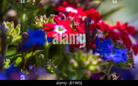 Summer garden flowers in sunlight. - Stock Photo
