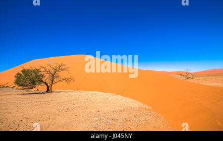 Dune 45, Sossusvlei, Namib-Naukluft National Park, Namibia - Stock Photo