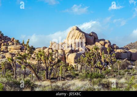 Desert landscape, Joshua Tree National Park, California, USA. - Stock Photo