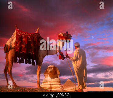 Camel ad driver with the Sphinx and Chephren Pyramid in distance, Giza, Cairo, Egypt. - Stock Photo