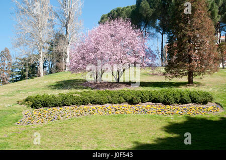 Parque Del Oeste, Madrid, Spain - Stock Photo
