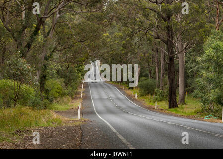A long straight stretch of road in country New South Wales, Australia,  lined with gum trees - Stock Photo