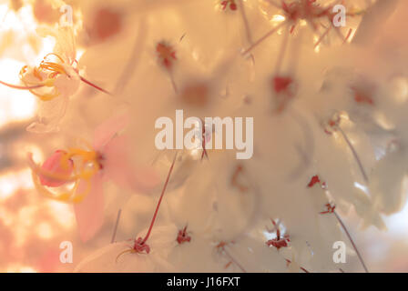 Close-Up Of Pink Flowers - Stock Photo