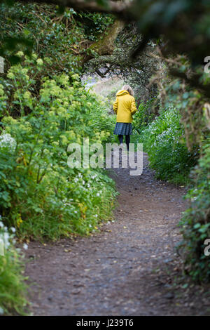 A lone woman in a bright yellow jacket walking alone through countryside along the South West Coast Path in Cornwall, - Stock Photo