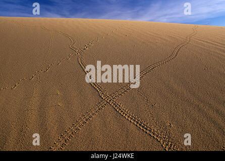 Kelso Dunes tracks, Mojave National Preserve, California - Stock Photo