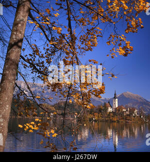 Lake Bled and Santa Maria church with autumn colour Slovenia - Stock Photo