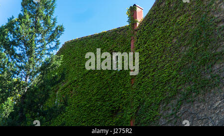 Wall of house, overgrown wild grapes in the old town. Tbilisi, Georgia. - Stock Photo
