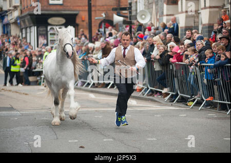 stallions and winning owners charging down cardigan high street at this years parade of stallions event in cardigan - Stock Photo