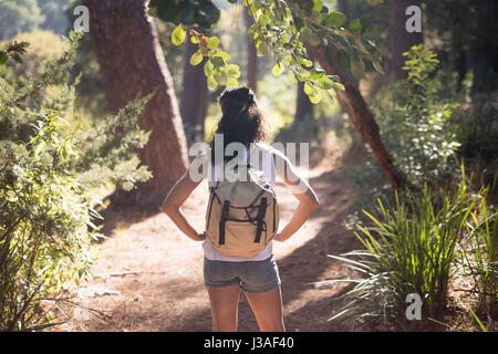 Rear view of female hiker standing on trail in forest - Stock Photo