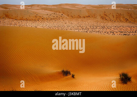 View across Wahiba Sands (Ramlat al Wahaybah) in Oman - Sharqiya Sands - Stock Photo