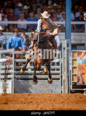 ARCADIA, FLORIDA - MARCH 9-  Horse bucking contests during the famous 84th All-Florida Championship Rodeo on March - Stock Photo