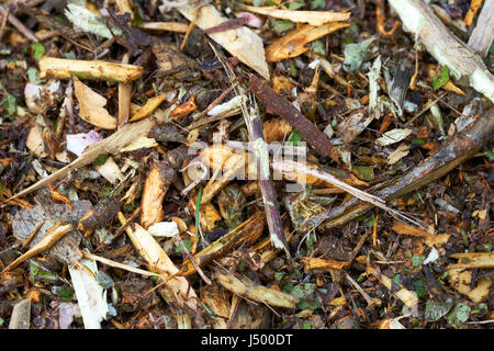 Freshly shredded garden green waste to be used for mulch and compost once sufficiently decomposed, UK. - Stock Photo