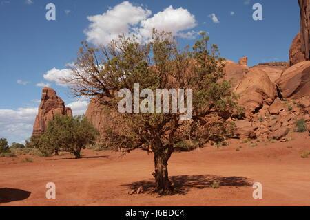 tree usa arizona indian indians tree desert wasteland usa america west arizona - Stock Photo