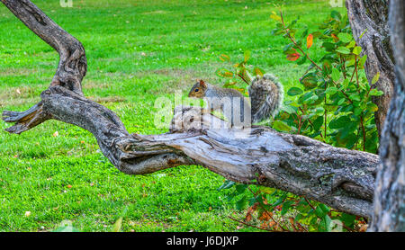 Cute young squirrel on a tree branch posing for a portrait - Stock Photo