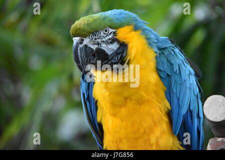 Colorful Macaw Bird - Stock Photo