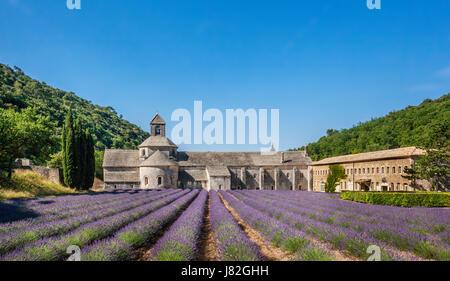 France, Provence-Alpes-Cote d'Azur, Vaucluse, Luberon, Sénanque Abbey, Abbaye Notre-Dame de Sénanque, view of the - Stock Photo