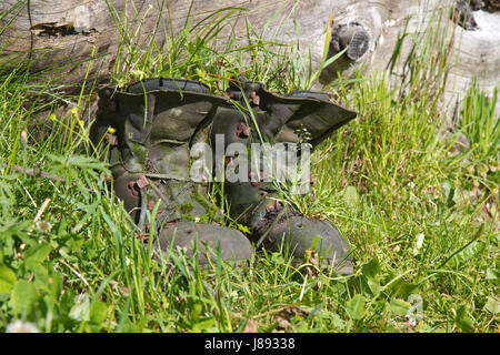 overgrown old hiking boots with grass - Stock Photo