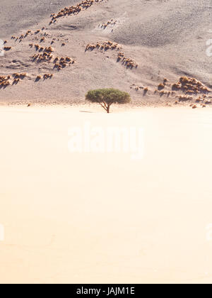 Tree growing on the Dune 45 (view from the above) in Namib Desert, Namib-Naukluft National Park, Namibia. - Stock Photo