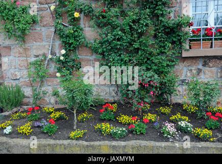 Blumenrabatte, rabatte, blumen, zierpflanzen, garten, park, blumenbeet, stadtmauer, mauer, eberbach, frühling, frühjahr - Stock Photo