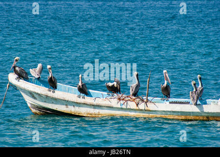 A bunch of pelicans sitting on a small fishing boat. - Stock Photo