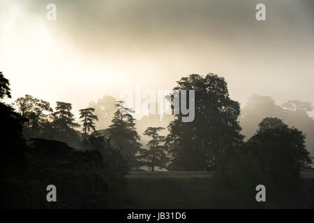 Woodstock church in the distance between trees on a early misty morning. Oxfordshire, England. Silhouette - Stock Photo