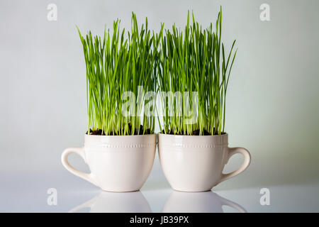 Green grass in cups. Fresh wheat plant composition - Stock Photo
