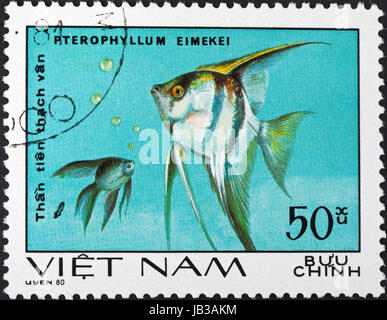 SOCIALIST REPUBLIC OF VIETNAM - CIRCA 1980: A postage stamp printed in the Vietnam shows pterophyllum eimekei - - Stock Photo