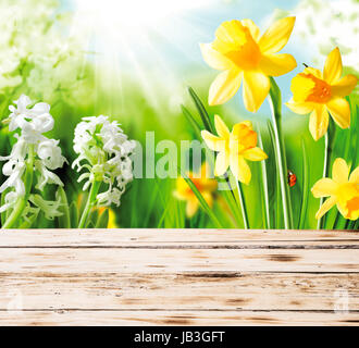 Colourful yellow spring daffodils and hyacinths with a red ladybug on the stem peeping over the top of a rustic - Stock Photo