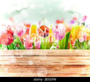 Multicoloured fresh spring tulips outdoors behind a rustic wooden fence in bright sunlight with a sparkling bokeh - Stock Photo