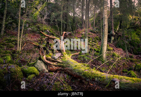 Scenic landscape with primeval forest at autumn day - Stock Photo