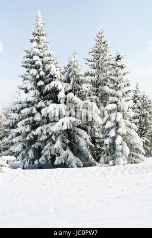 snowbound fir trees near ski run in skiing area Via Lattea (Milky Way), Sestriere, Italy - Stock Photo
