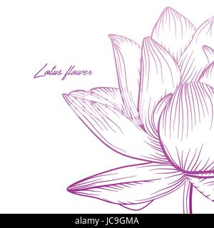 Lotus water lily waterlily vector beautiful flower colorful pink purple soft gradient illustration. Hand drawn fine - Stock Photo