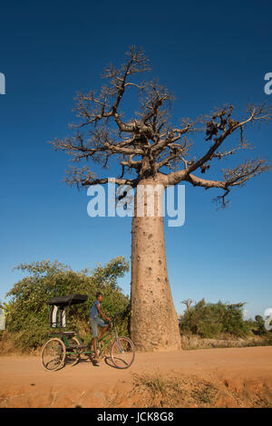 A boy and his rickshaw, Avenue of the Baobabs, Madagascar - Stock Photo