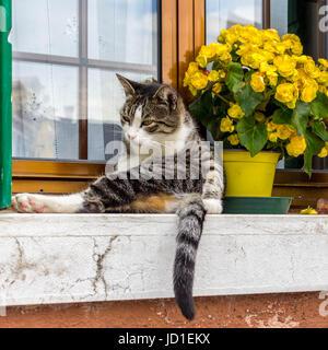 Venedig, Burano, Murano - Stock Photo