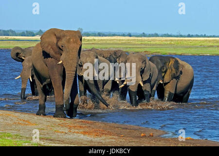 Elephant's cookers in the water hole, Elefantenherde am Wasserloch - Stock Photo