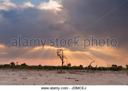 Savuti Marsh at sunset. - Stock Photo