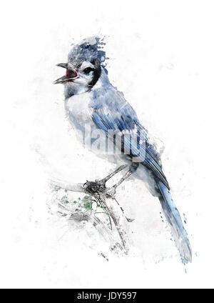 Watercolor Digital Painting Of Blue Jay Bird - Stock Photo