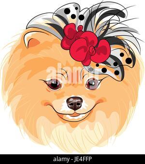 vector fashion dog Pomeranian breed smiling - Stock Photo