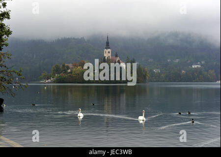 Slovenia, region of Gorenjska, Bled, Bleder lake, island with church, swans in the foreground, - Stock Photo