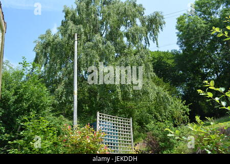 large silver birch tree overhanging power electricity telephone lines and wires with wooden timber post in garden - Stock Photo