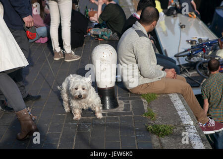 LONDON, ENGLAND - JULY 12, 2017 Dog among the legs, near the Regent channel - Stock Photo