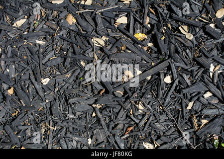 Black, burnt wood chip mulch - texture or background. Mulch keeps soil moisture, improving  soil  fertility and - Stock Photo