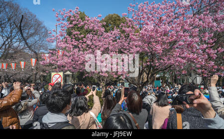 Japan, Tokyo City, Ueno district, Ueno Park, celebrating cherry blossoms - Stock Photo